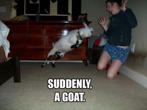 suddenly-a-goat